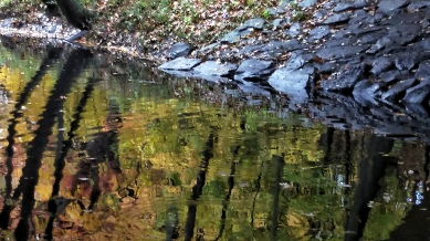 Fall Reflects in Muddy River 2c
