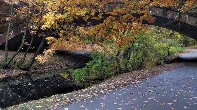 Longwood Avenue Bridge in the Fall 3
