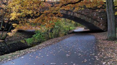 Longwood Avenue Bridge in the Fall 2