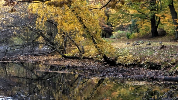 By Muddy River in the Fall (B)