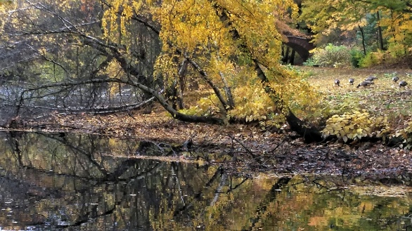 By Muddy River in the Fall (A)