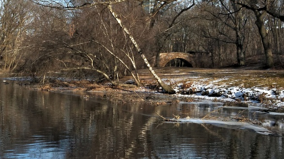 By Muddy River in Winter B