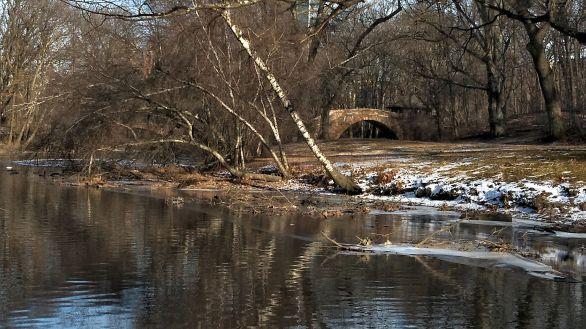 By Muddy River in Winter B