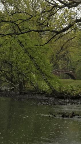 Spring Rain at Muddy River B