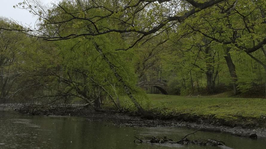 Spring Rain at Muddy River A