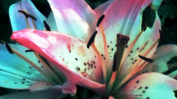 Lilies with a Touch of Purple 2 (Colorized)